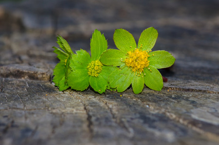 green flower on wooden trunk image background photo