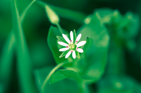 detail of soft white flower on green background  photo