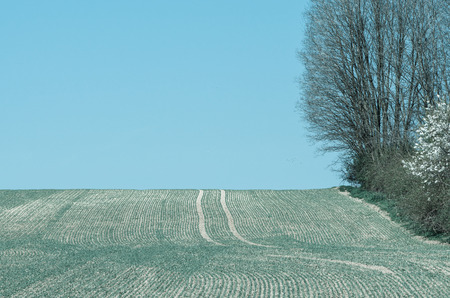 field stripped: agricultural field in spring time and blue sky