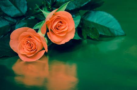 rosas naranjas: dos rosas de color naranja sobre fondo verde