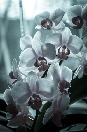 group of retro pink orchid bunch image Stock Photo