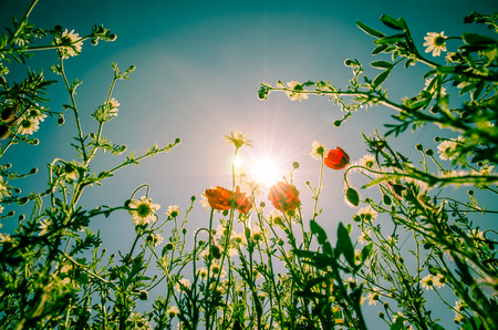 colorful flowers and sky image photo