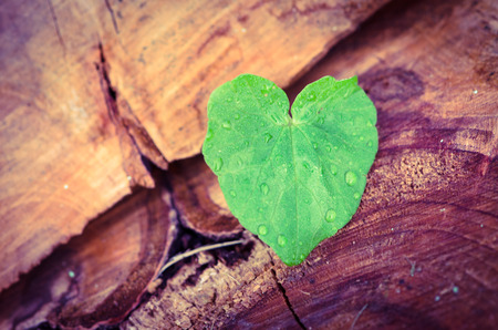 green leaf in heart shape with water drops photo