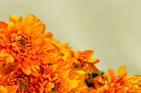detail of orange  chrysanthemum flower photo