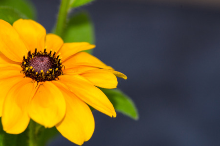 detail of yellow flower image photo