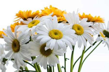 flower bunch: gerbera flower bunch Stock Photo