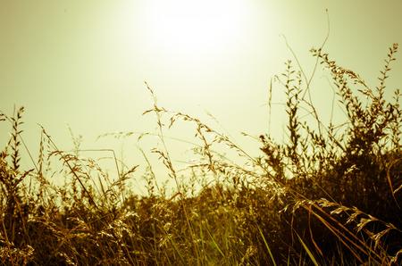filtered: la puesta del sol y la hierba efecto filtran retro