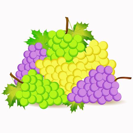 hintergrund gr�n gelb: gr�n, gelb und violett Trauben cartoon illustration