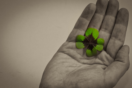 four fourleaf: Detail of green clover plant in human hand Stock Photo