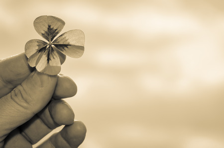 Detail of clover plant in human fingers sepia effect photo