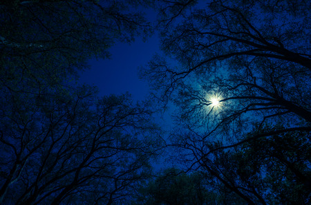 night view: sun in blue dark sky over tree branches