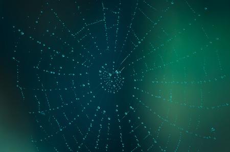 steamy: steamy spider web macro image