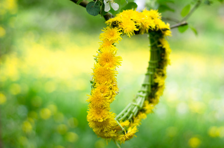 dandelion: yellow dandelion chain hanged in spring tree Stock Photo