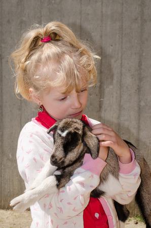 blond girl: beautiful blond girl holding baby goat Stock Photo