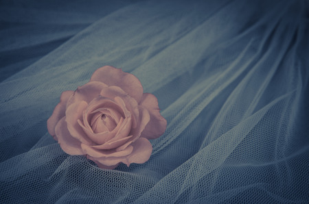 filtered: filtered pink roses over white background