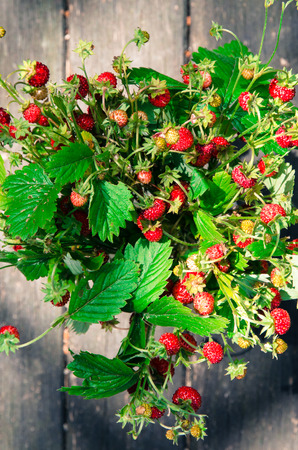 'wild strawberry: bunch of red wild strawberry with green leaves in a glass