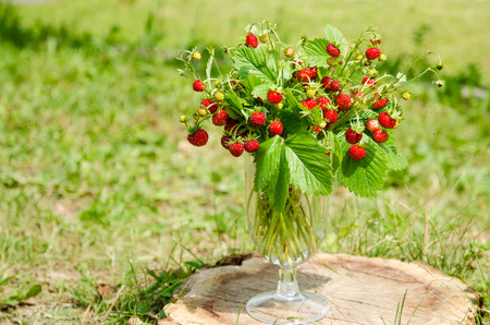 'wild strawberry: bunch of red wild strawberry with green leaves