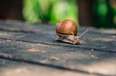 snail: snail Stock Photo
