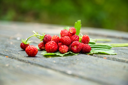 'wild strawberry: red wild strawberry with green leaves over wooden background