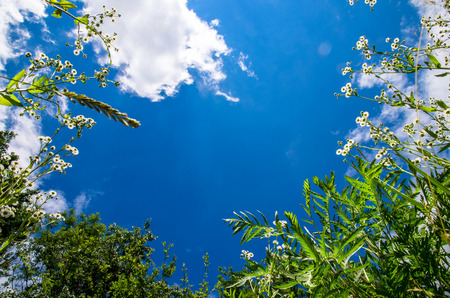 panoramatic: green leaves and blue sky Stock Photo