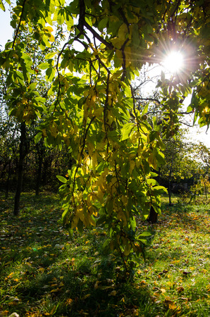 nostalgy: autumn scene with sun
