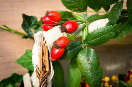 briar: red briar fruits background image Stock Photo