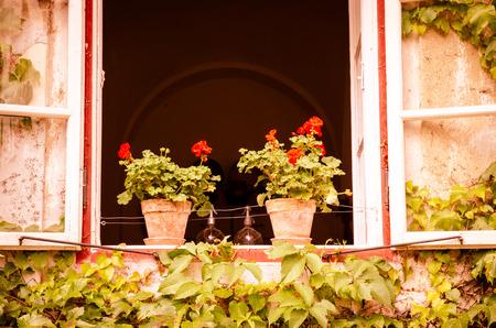 pictoresque: flower pot with red pelargonium flower