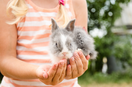 cute young farm girl: girl holding young bunny rabbit in hands detail Stock Photo