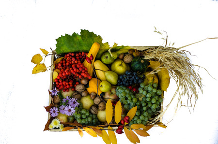 fruits in a basket: group of colorful autumn fruits in a basket