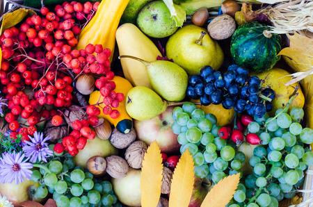 healt: group of colorful autumn fruits Stock Photo