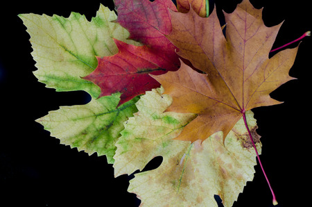herbst: group of colorful autumn leaves