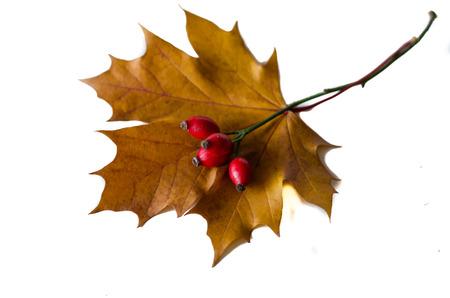herbst: autumn still-life scene