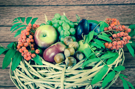 rowanberry: autumn seasonal fruits - red and green apples, grape, pear, hazelnut, rowanberry and plums