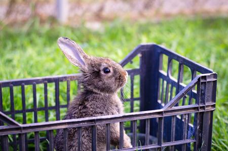rabbit cage: dark bunny rabbit pet in cage outside Archivio Fotografico
