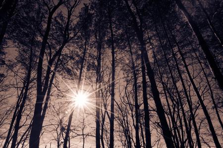 hight: sun shining behing hight trees