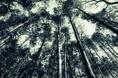 dark sky: view to the top of trees