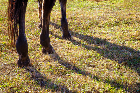 hoof: horse hoof in green grass
