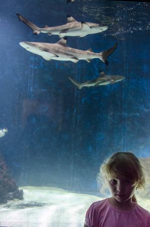 oceanarium: girl in oceanarium and swimming sharks