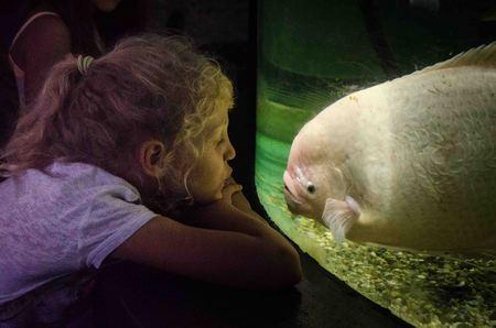 oceanarium: girl in oceanarium and white big fish