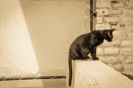 tone: black cat animal sepia tone