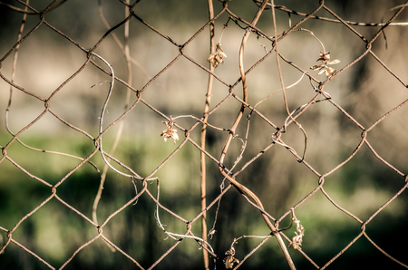 steel wire: view through steel wire fence concept