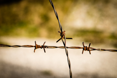 barbed wire fence: rusty steel barbed wire fence