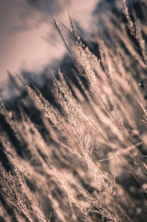 tone: dry stalk grass tone image