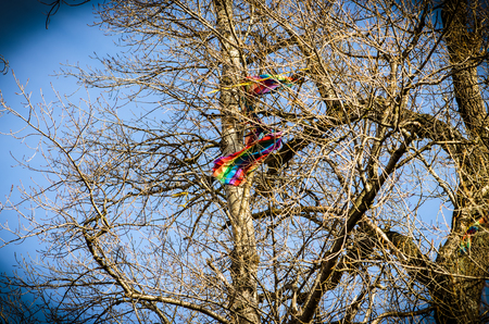 trapped: kite trapped in the tree