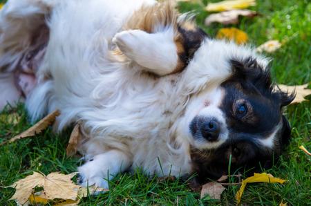 cute dog lying in autumn grass