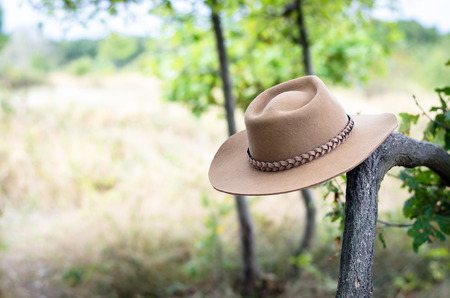 hung: cowboy hat hung on the branch in the woods