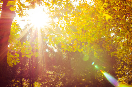 colorful autumn trees and sunlight atmosphere