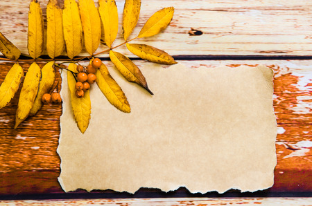 rowanberry: blank paper with orange autumn rowanberry leaf