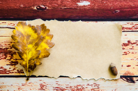 beech leaf: blank paper with yellow green autumn beech leaf