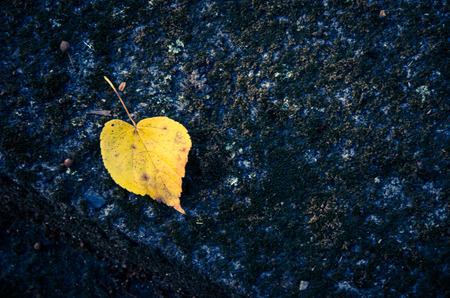 nostalgy: yellow autumn leaf on the grave